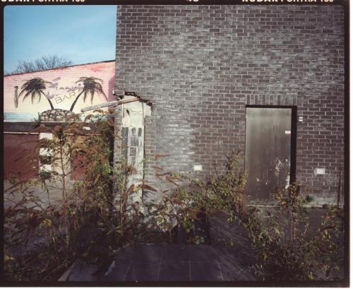 philippe mailleux, bar, palmier, abandonné