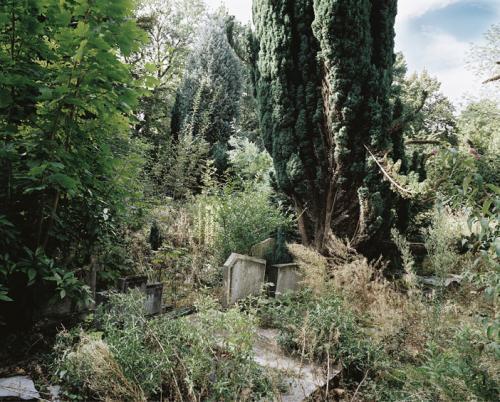 philippe mailleux, cimetière, tombes, abandonné, nature