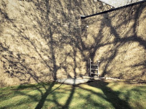 ombre-arbre-projection